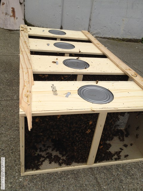Simple Tricks for Populating a Human-made Beehive Successfully