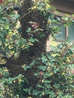 swarm removal