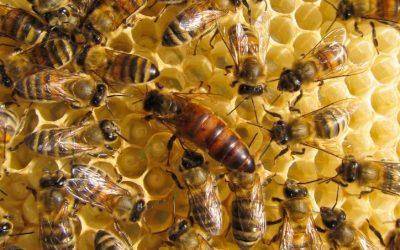 She's the Queen Bee, YO!