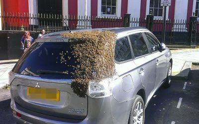 How To Avoid The Dangers Of Bee Swarms!