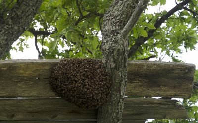 A Beehive is on Your Property! What Shall You Do?